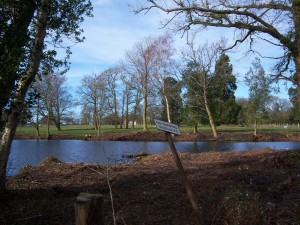 Village Pond - 2015/6 Picture taken by Margaret Bampton